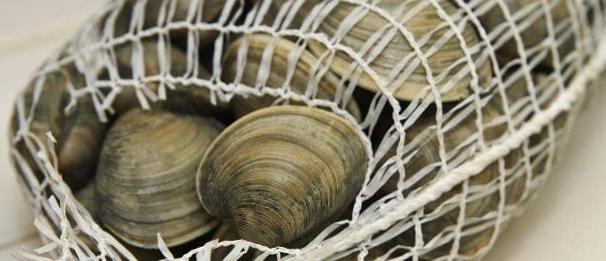 Clams stored in a mesh bag